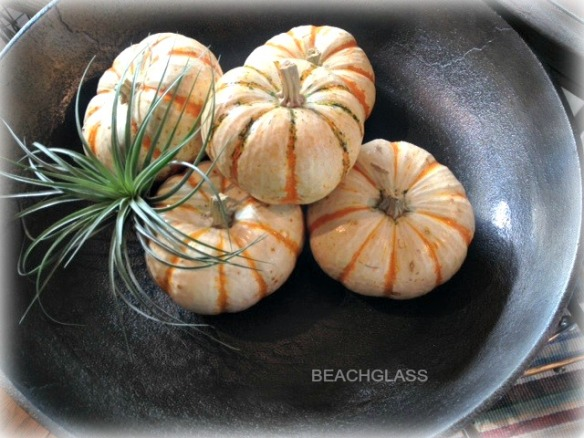 airplant and pumpkins